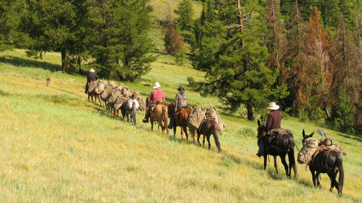 a mule train going camping in a grassy meadow