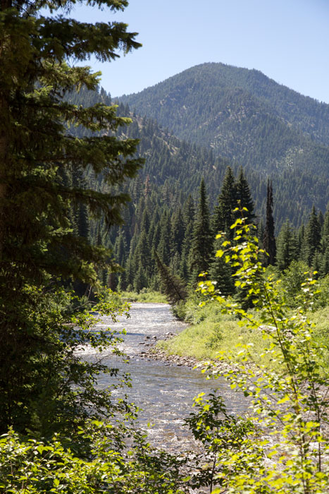 a mountain creek in the montana wilderness