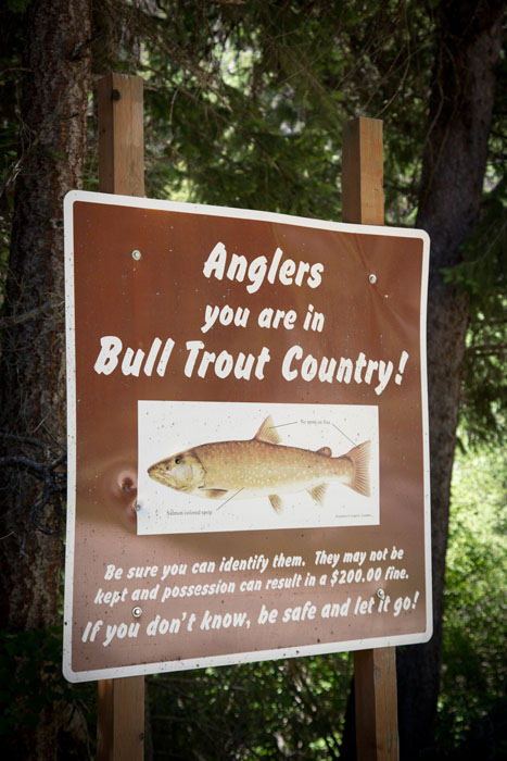 sign identifying bull trout
