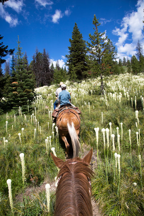 horseback riding in beargrass blooming in idaho
