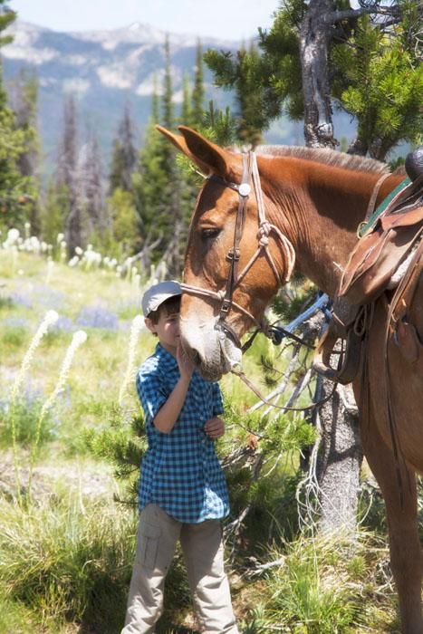 boy pets a mule in a mountain meadow idaho