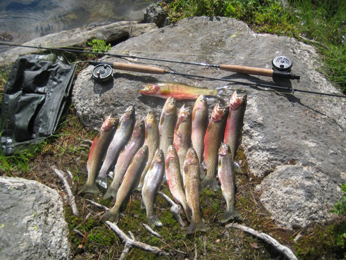 several trout and fly rods show a successful day fishing