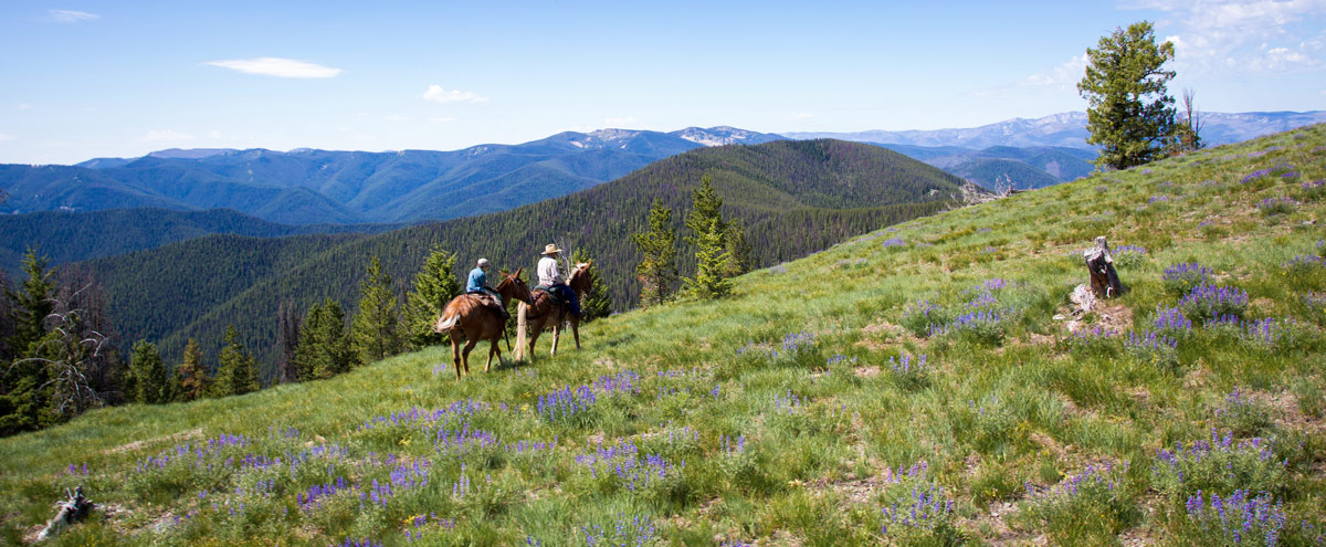 horse riding in a mountain meadow in spring